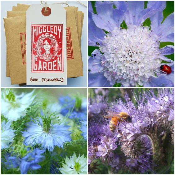 Bee Butterfly Friendly Seed Collection for 2016