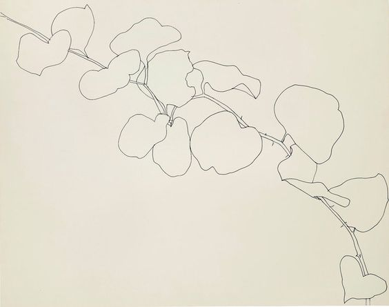Ellsworth Kelly's Plant Drawings at the Met - The New York Times