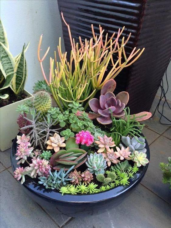 succulent and cacti in a wide planter #gardenIdeas #garden #gardening #plants #homeDecor #indoor