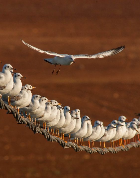colorel11:  © NeGGGorich..seagulls team