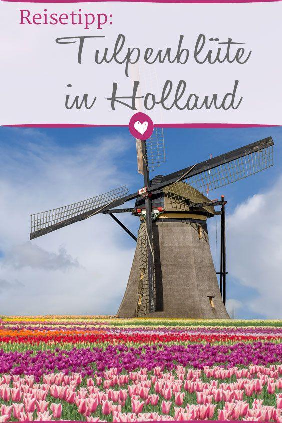 Zur Tulpenblute Nach Holland Niederlande Urlaub Urlaub Holland
