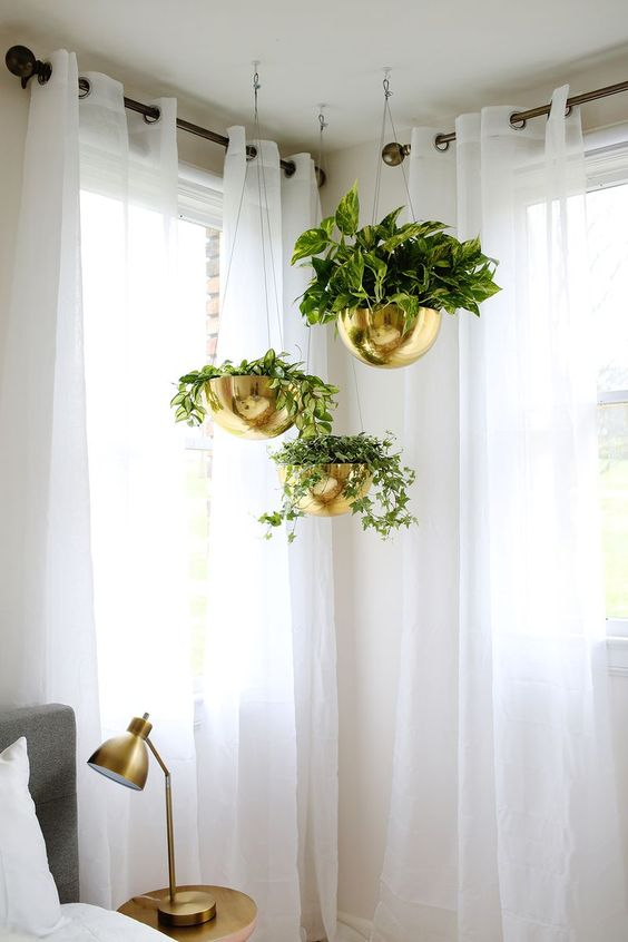 Hanging plants in a crisp guest room