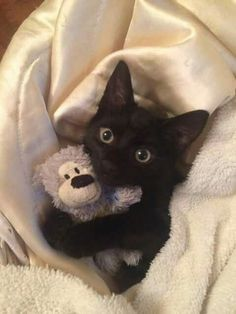 Cute black kitten hugging her toy #blackkitty #blackkitten #blackcat #socute