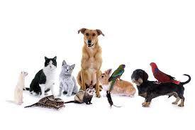 Все, что нужно для Вашего питомца со скидками вы найдете в интернет-магазине для домашних животных ЮниЗоо.ру!  Летние скидки на сайте UniZOO до 25% на товары для животных! http://unizoo.berikod.ru/coupon/6576/  UniZoo промокод сентябрь 2014 на скидку на корм Pro Plan для собак! - http://unizoo.berikod.ru/coupon/6572/   ЮниЗоо промокод сентябрь 2014 на скидку -10% на сухой корм Pro Plan для кошек! - http://unizoo.berikod.ru/coupon/6579/  #ЮниЗоо #промокод #UniZoo #Животные #Корм #кошка…
