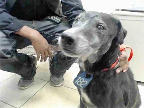 Adopt Ethel On Labrador Retriever Cute Dog Photos Funny Dog Photos