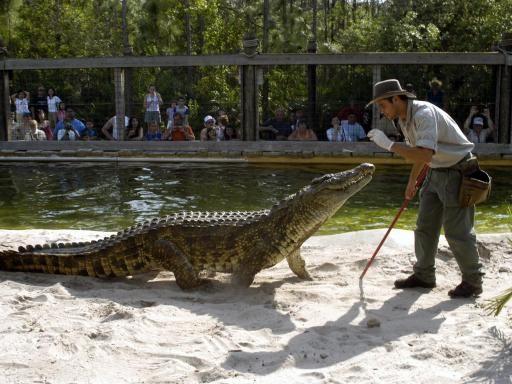 Gatorland Orlando Amusement Parks In Florida Florida Theme Parks Best Amusement Parks