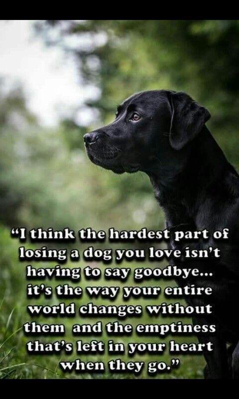 Dog Quotes Dog Quotes Losing A Dog Dog Love