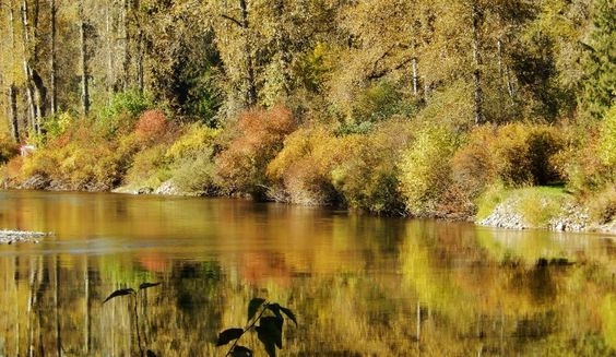Subtle Fall color on the North Fork of Coeur d'Alene River, North Idaho