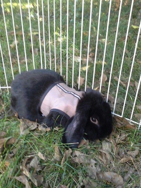 My bunny Sullivan