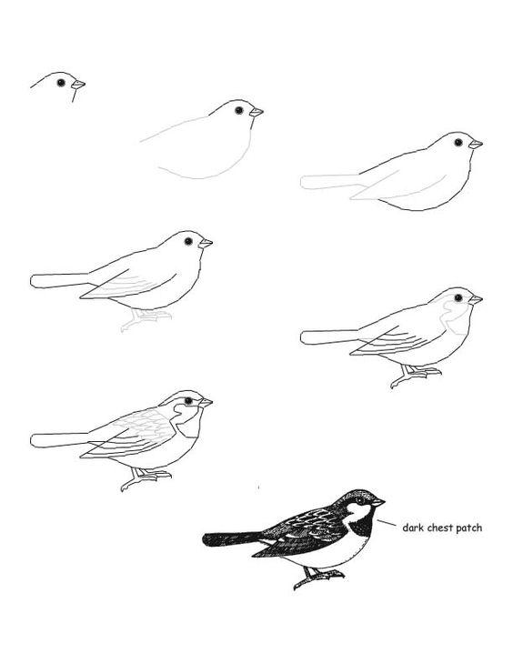 Comment dessiner un oiseau exercices de dessin pinterest comment dessiner oiseaux et - Dessiner un oiseau ...