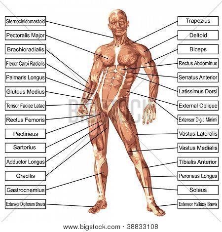 CONCEPTOS BIOLOGIA PDF CAMPBELL RELACIONES Y