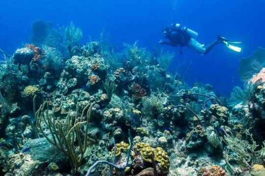 Scuba Diving Turks And Caicos Diving Best Scuba Diving Scuba Diving