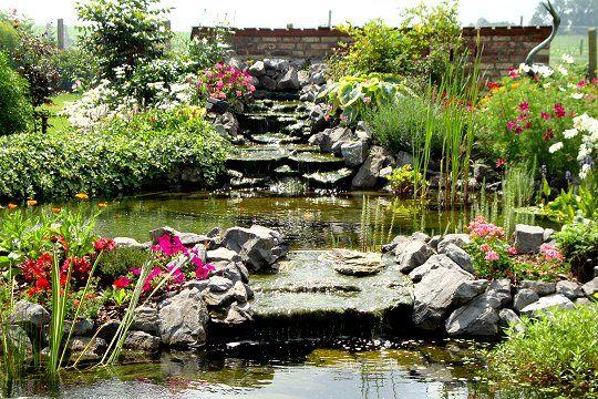 Le bassin de nelly est form partir d 39 une b che epdm le premier coup de b che a t donn en - Bassin de jardin bache ...