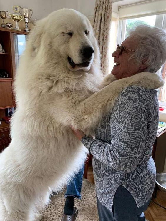21 άτομα που ήθελαν ένα σκυλί αλλά κατέληξαν να πάρουν ένα γιγάντιο μάλλινο λύκο (Μέρος 1ο)
