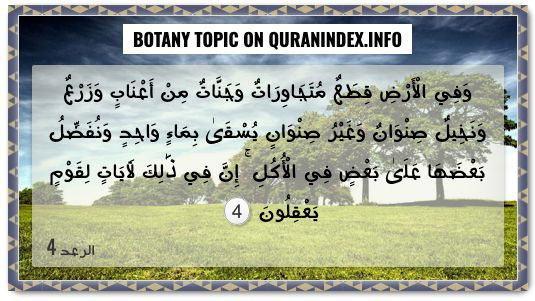 Search Botany Topic In Quran Surahs Verses And Islam Quran Index Search Quran Verses Quran Quran Text