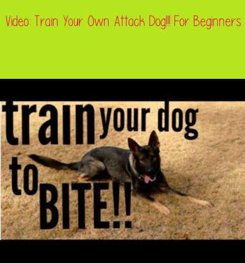 Train Your Own Attack Dog For Beginnersdisclaimer I Am Not