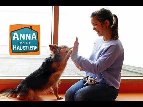 Schulhund Information Fur Kinder Anna Und Die Haustiere Spezial Youtube Schulhund Haustiere Hunde