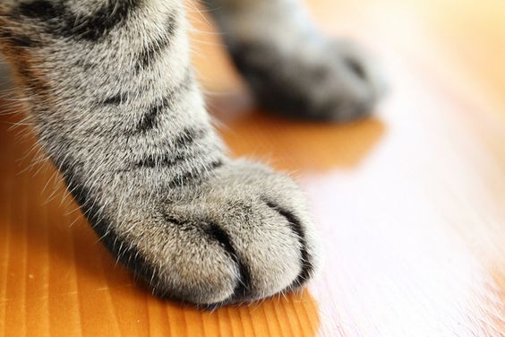 there's nothing better than a kitty paw <3