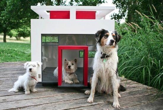Modern Glass #dog #house