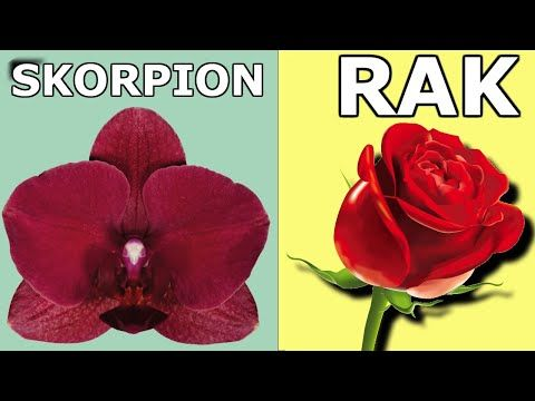 Jakie Kwiaty Przynosza Szczescie Zgodnie Ze Znakiem Zodiaku Youtube Perfect Plants Scorpio And Cancer Zodiac Signs