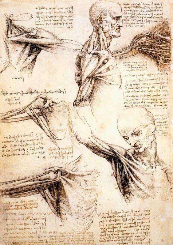estudos de anatomia leonardo da vinci - Pesquisa Google