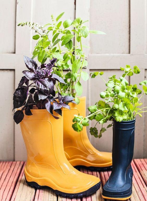 Jeito divertido de cultivar ervas: em galochas! A poda das flores evita que tirem a energia do manjericão (Foto: Elisa Correa / Editora Globo)