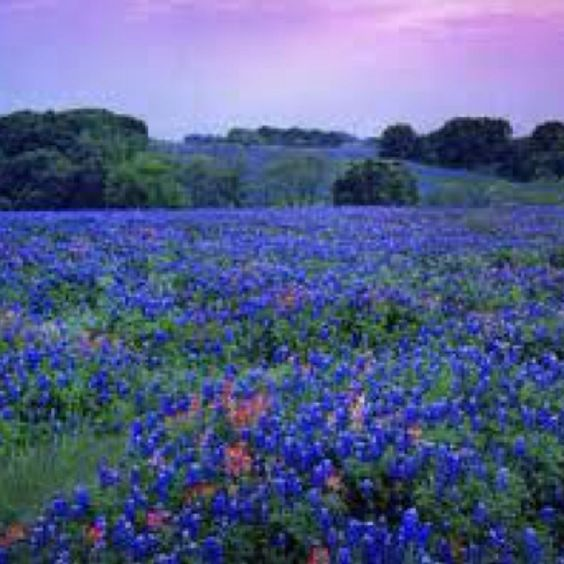 Nothing beats spring in Texas!