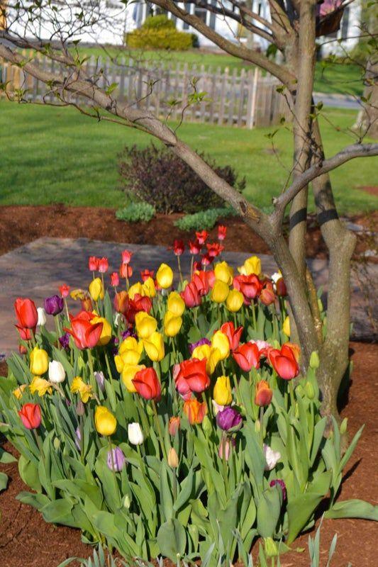 The Idea Garden Spring Bulb Display Bulbs Garden Design Garden Bulbs Plants