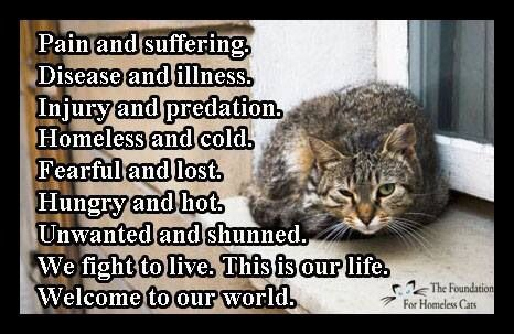 Via The Foundation for Homeless Cats on Facebook: