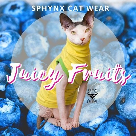 Time To Get Ready For Fall Sphynx Cat Cats Sphynx