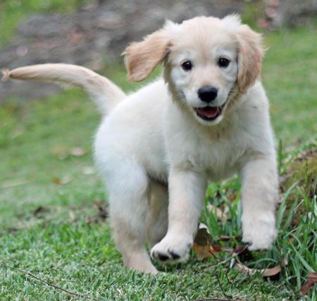 Dog Origins:  Where Do Dogs Come From?