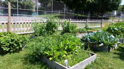 Green and lush...what Tamarack's garden looks like. :)