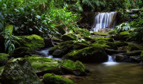 Cascades - A peaceful cascade at the Tijuca Forest (Floresta da Tijuca in Portuguese). Tijuca Forest is a mountainous hand-planted rainforest in the city of Rio de Janeiro, Brazil. It is the world's largest urban forest, covering some 32 km² (12.4 mi²). It is a mountainous region and the forest contains a number of attractions, most notably the statue of Christ the Redeemer atop Corcovado mountain. Thank you very much for your support!