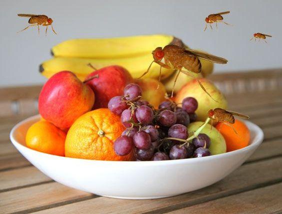 10 Fallen, die Fruchtfliegen keine Chance lassen | eatsmarter.de