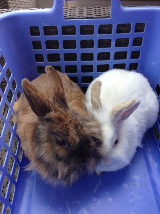 #rabbit #pet
