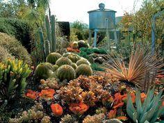 wunderschöner exotischer Garten winterharte Kakteen Outdoor
