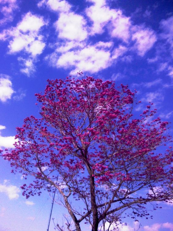 céu de Curitiba