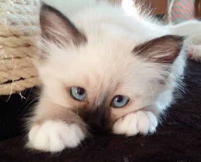 "It's that irresistible kitten ""look"""