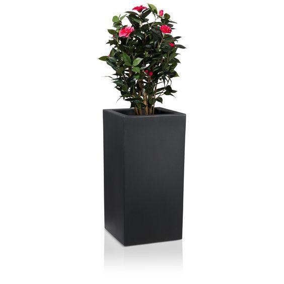 Der hohe Kunststoff-Pflanzkübel TORRE 80 überzeugt durch sein geradliniges, rechteckiges Design und eignet sich aufgrund seiner Höhe von 80 cm ideal als Pflanzsäule. Insbesondere bei der Dekoration von Eingangsbereichen, Foyers und Lobbys macht der Pflanzkübel in mattem Anthrazit eine gute Figur und bringt Ihre Pflanzen optimal zur Geltung. Nach Wunsch kann der Blumenkübel auch in Außenbereichen  eingesetzt werden.