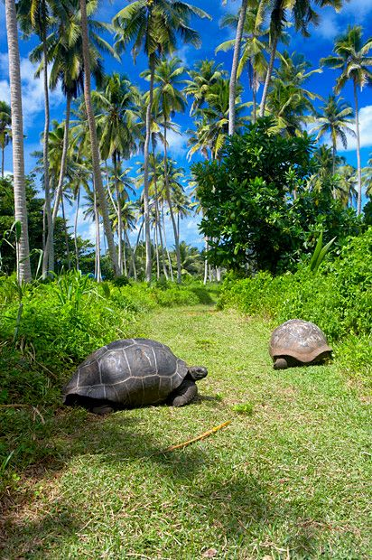 Tortoises at Frégate Island Private Hotel, Frégate, Seychelles