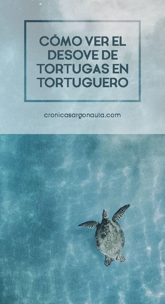 Toda la información que necesitas para ver el desove de tortugas en Tortuguero, Costa Rica.