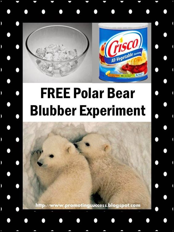Free Polar Bear Experiment PLUS lots other winter activity ideas!  REPIN and check out this blog later with LOTS of FREE teaching ideas and resources! ~Promoting Success for You and Your Students!: