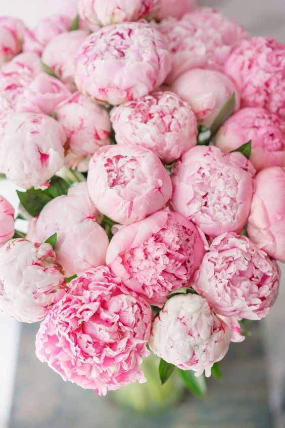 Photos of Peonies - My Cozy Sundays