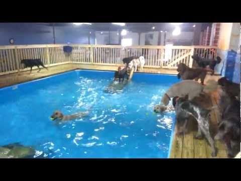 happy tails pet resort, indoor dog pool, norfolk va