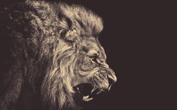 Angry-Lion.jpg (1600×1000)