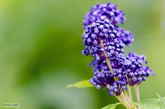 Little Purple by Quentin CUVELIER on 500px