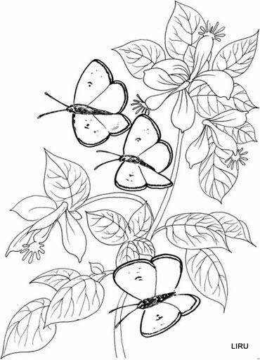 mariposas, nuevas | MULTY PATRONES