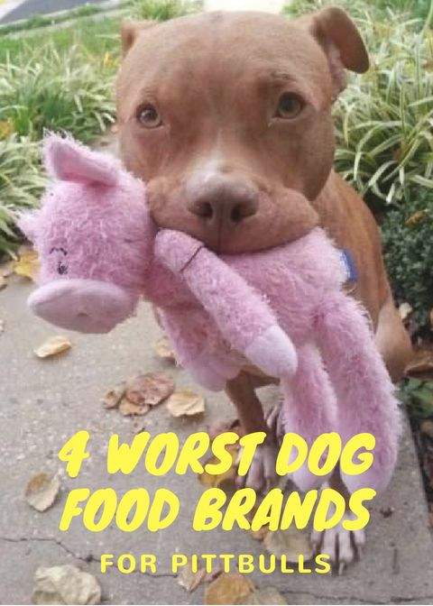 4 Dog Food Brands To Avoid Dog Food Brands Dogs Dog Food Recipes
