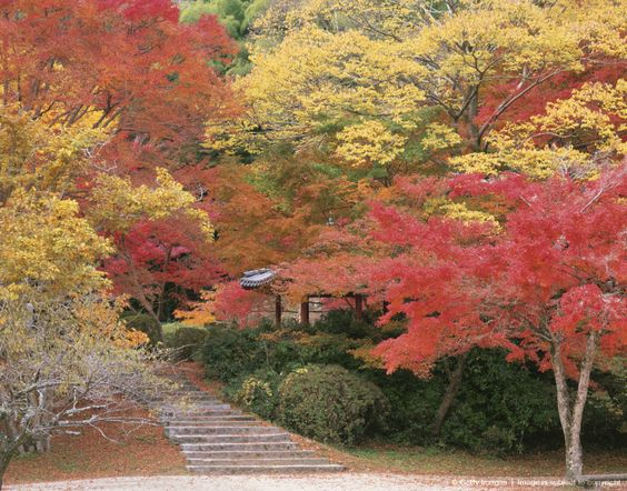 Japan, Yamaguchi Prefecture, Trees in park
