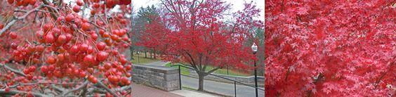 Denison University, OH